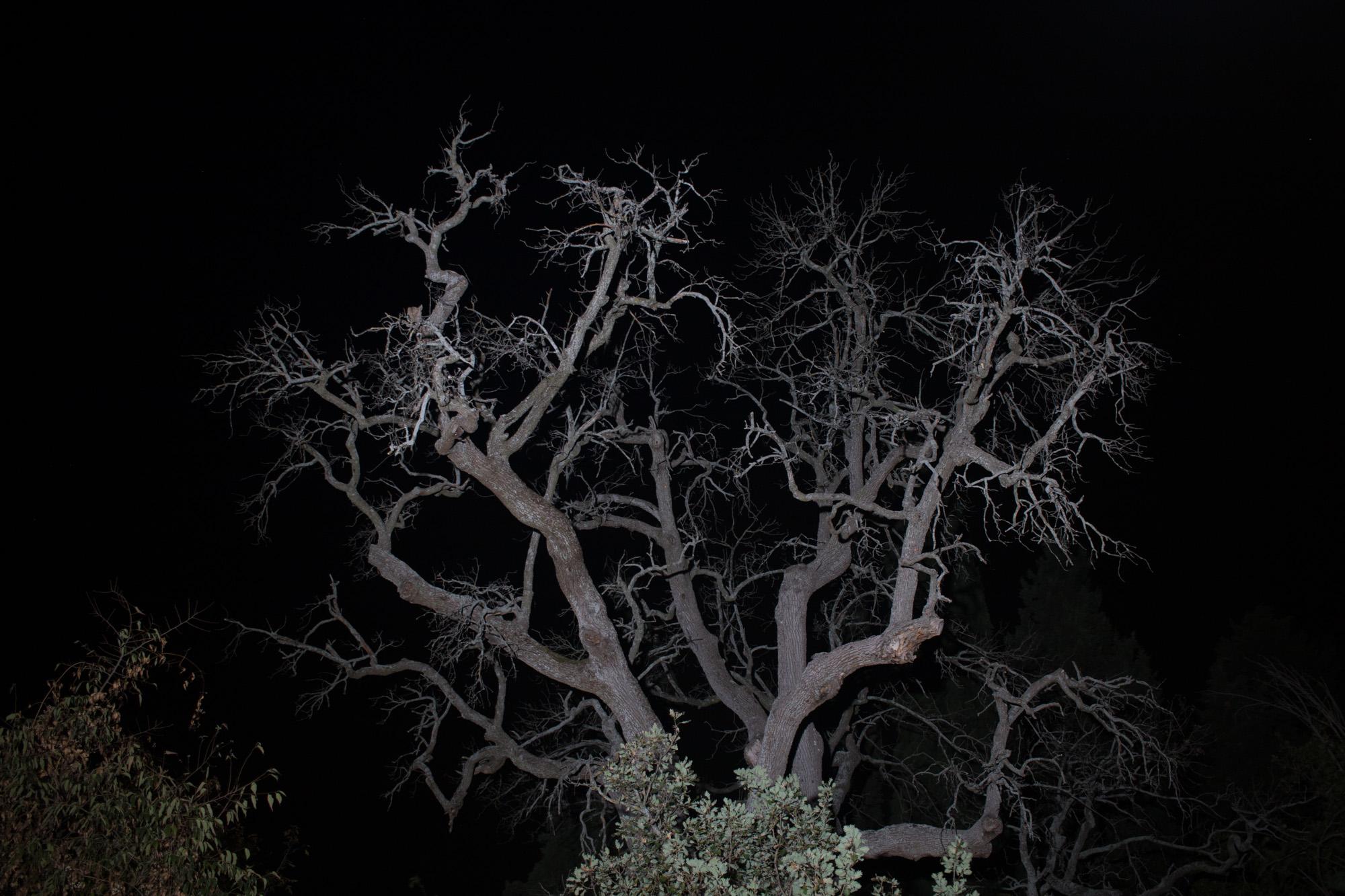 Il bello essenziale nella fotografia notturna 10